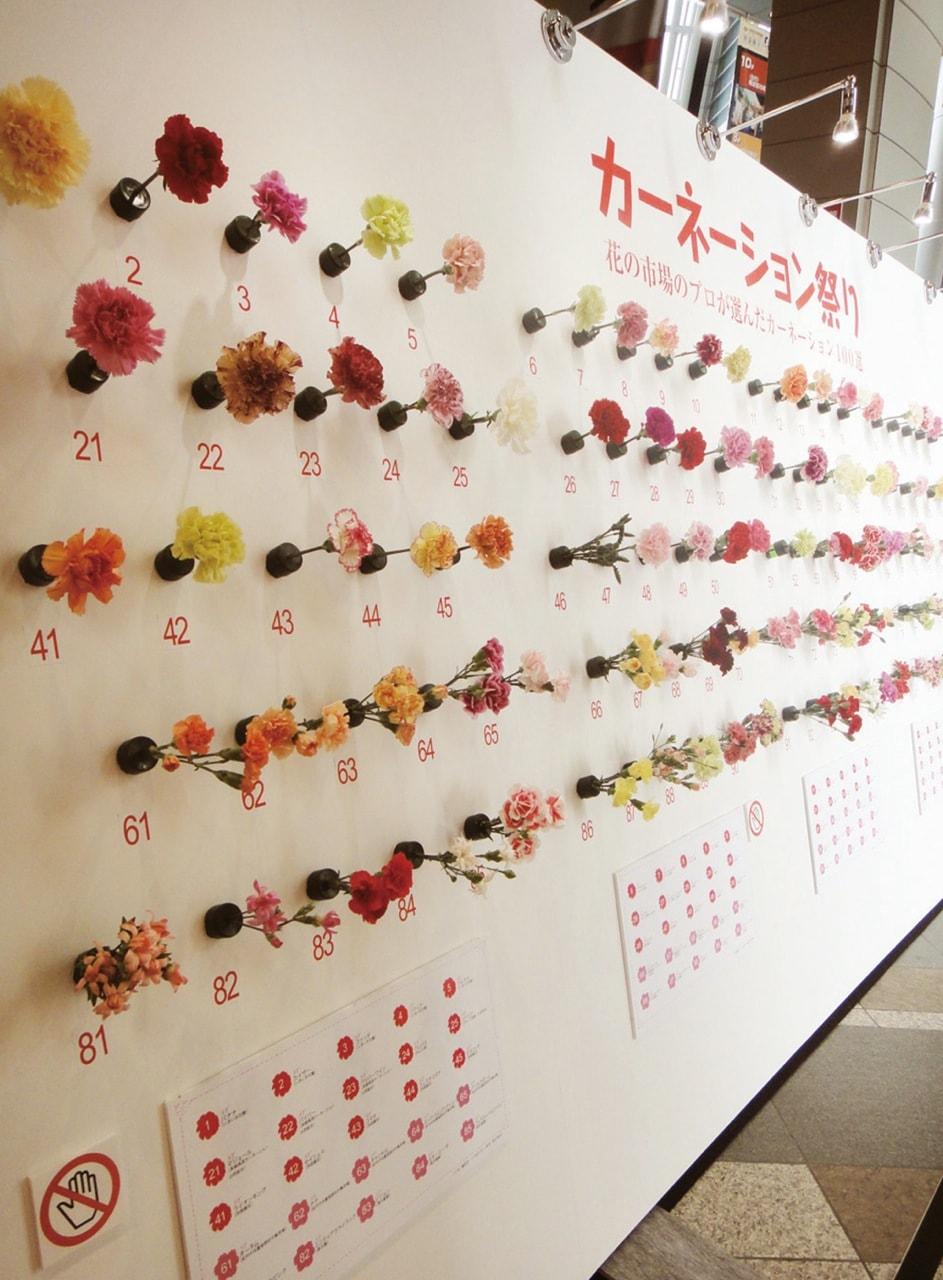 NHKカーネーション祭り